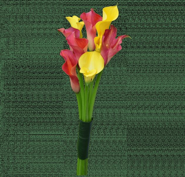 Комплимент с каллами – Интернет-магазин цветов STUDIO Flores