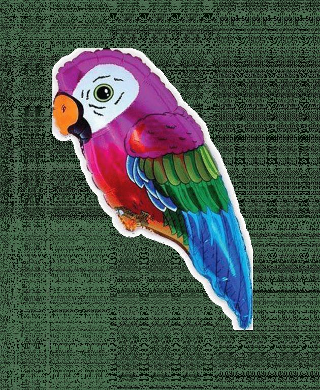 Попугайчик – Интернет-магазин цветов STUDIO Flores