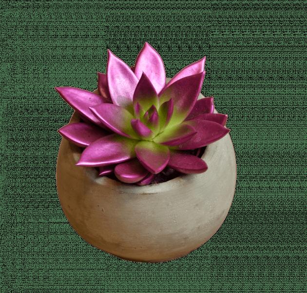 Эхеверия крашеная металлик – Интернет-магазин цветов STUDIO Flores