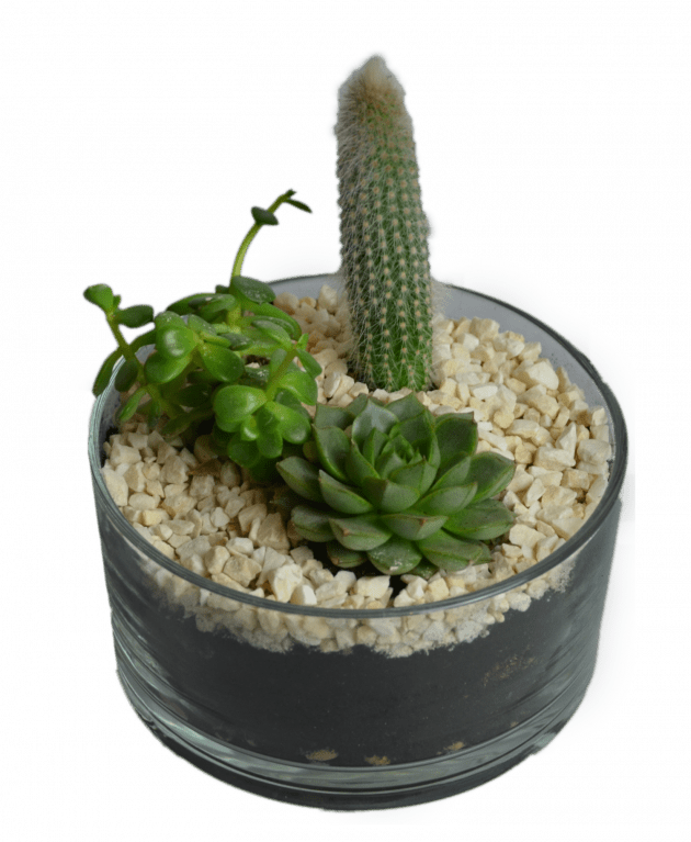 Флорариум Сафари – Интернет-магазин цветов STUDIO Flores