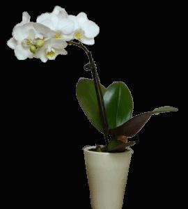 Екзотичні квіти з доставкою по Києву
