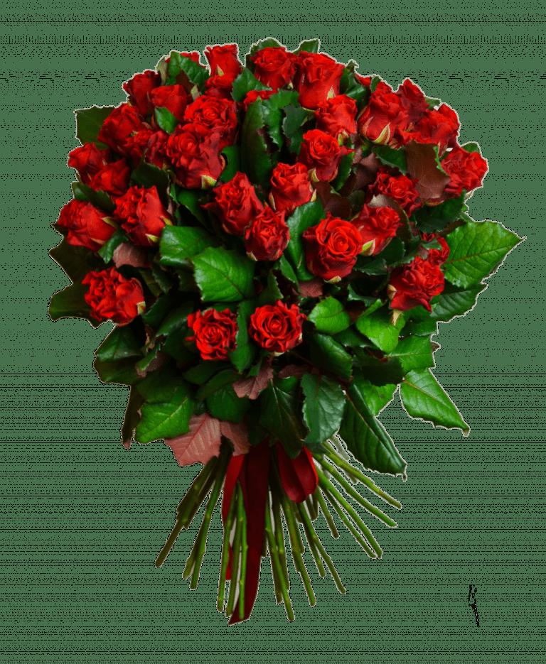 51 и 101 роза Эль Торо – Интернет-магазин цветов STUDIO Flores