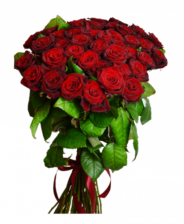 51 red roses – Flower shop STUDIO Flores