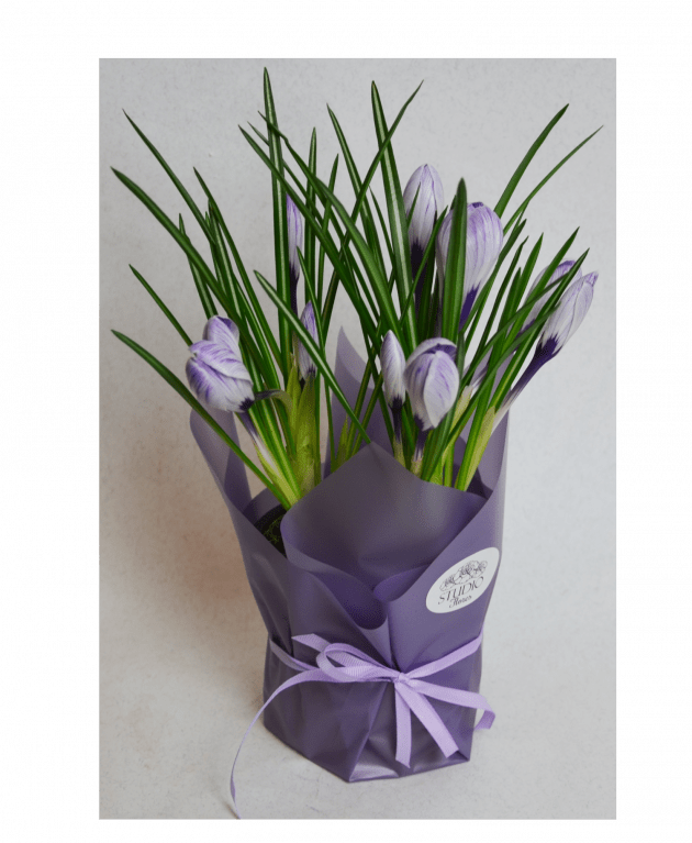 Крокусы – Интернет-магазин цветов STUDIO Flores