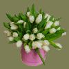 51 тюльпан в коробке – Интернет-магазин цветов STUDIO Flores