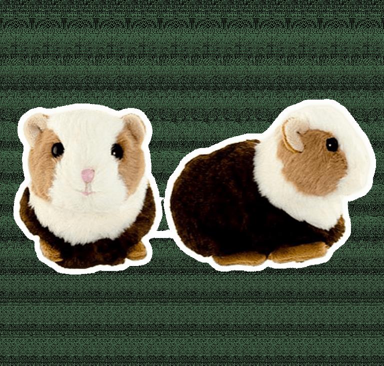 The guinea pig – Flower shop STUDIO Flores