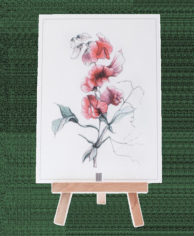Postcard four – Flower shop STUDIO Flores