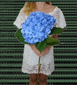 Синяя гортензия – Интернет-магазин цветов STUDIO Flores