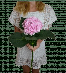Розовая гортензия – Flower shop STUDIO Flores