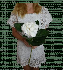 Белая гортензия – Интернет-магазин цветов STUDIO Flores
