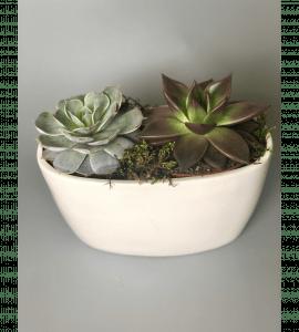 Суккуленты в кашпо – Интернет-магазин цветов STUDIO Flores