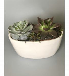Суккуленты в кашпо – Інтернет-магазин квітів STUDIO Flores