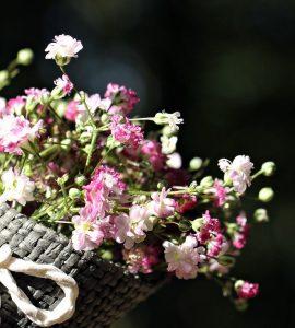 Квіти для тещі – flores-shop.com.ua