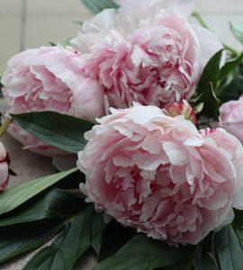 Букети з півоній – flores-shop.com.ua