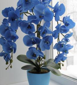 Купить орхидею в горшке
