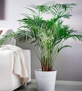 Безпечні рослини для кішок – Інтернет-магазин квітів STUDIO Flores